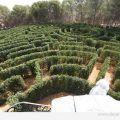 laberinto vegetal cartagena